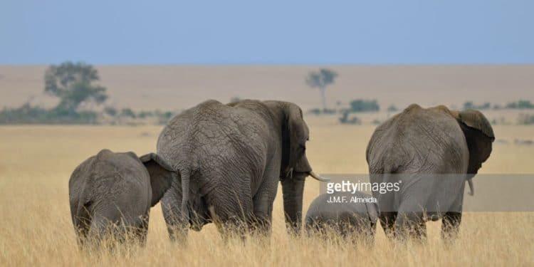 5 Kenya's Most Beautiful Safari Destinations