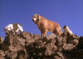 Chance, Shadow, and Sassy make their way through the Sierra Nevada to get back to their owners (Image Credits: Walt Disney Pictures)