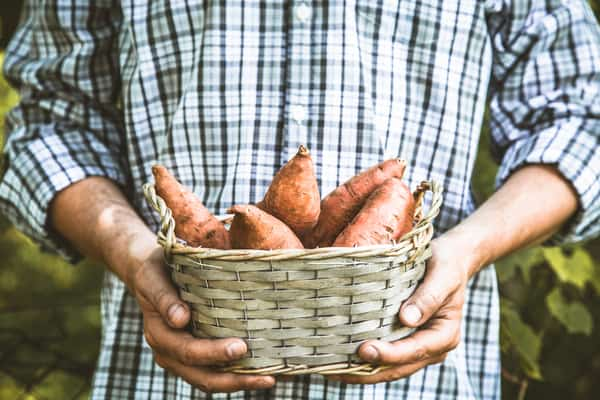 Sweet Potatoes: Even More Nutritious Than You Think