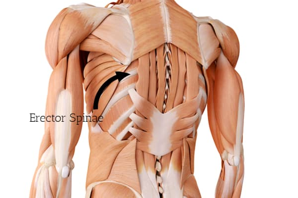 What is the posterior chain and importance of strong erector spinae.