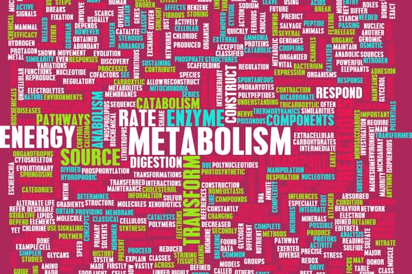Components of Metabolism