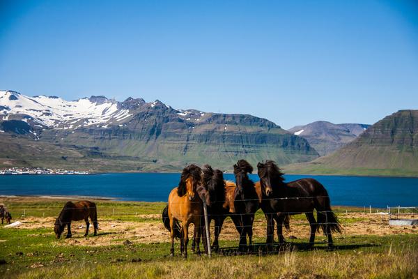 Golden Circle, Iceland Horse riding